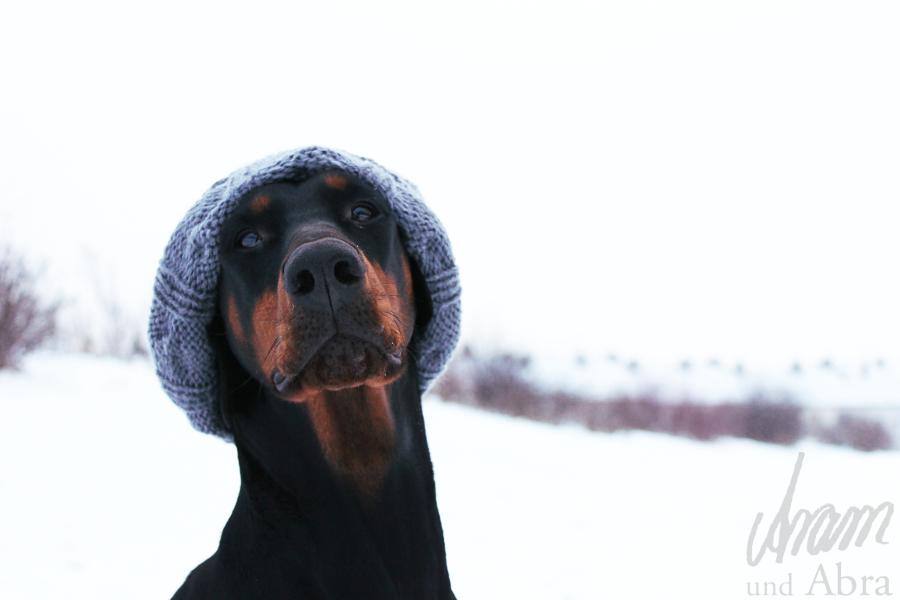 Hundefotos: Interview mit der Tierfotografin Nadine Golomb + Tipps für bessere Fotos von eurem Hund