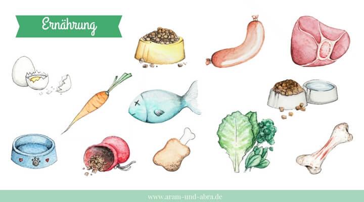 "Illustrationen für Hundeblogger - Grafik-Set ""Ernährung"""