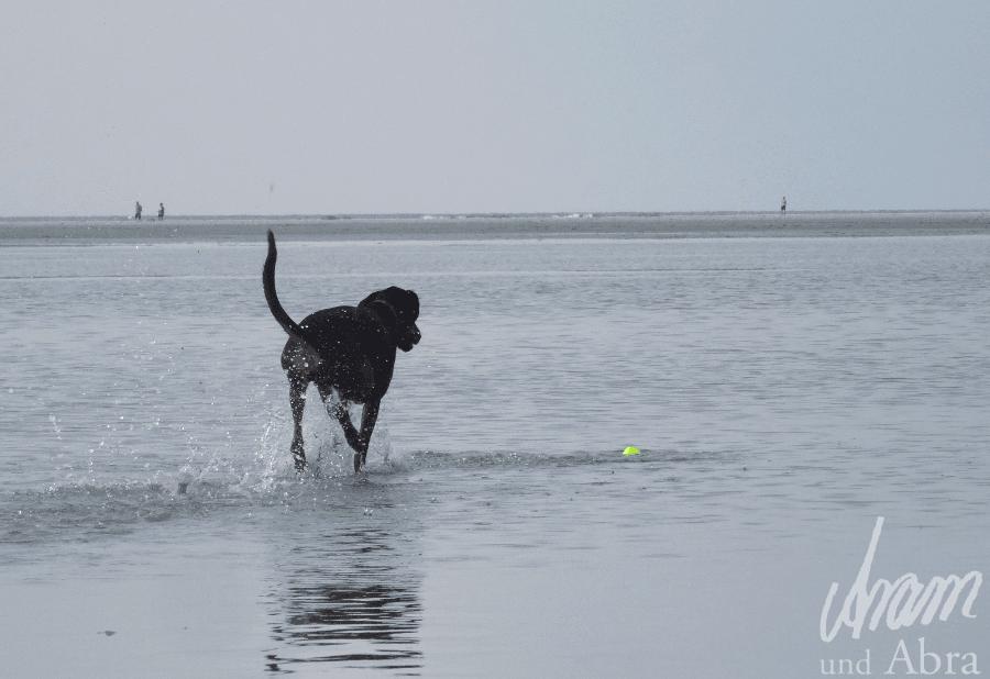Der Hund als Mitarbeiter - Liebster Award - Hundeblog