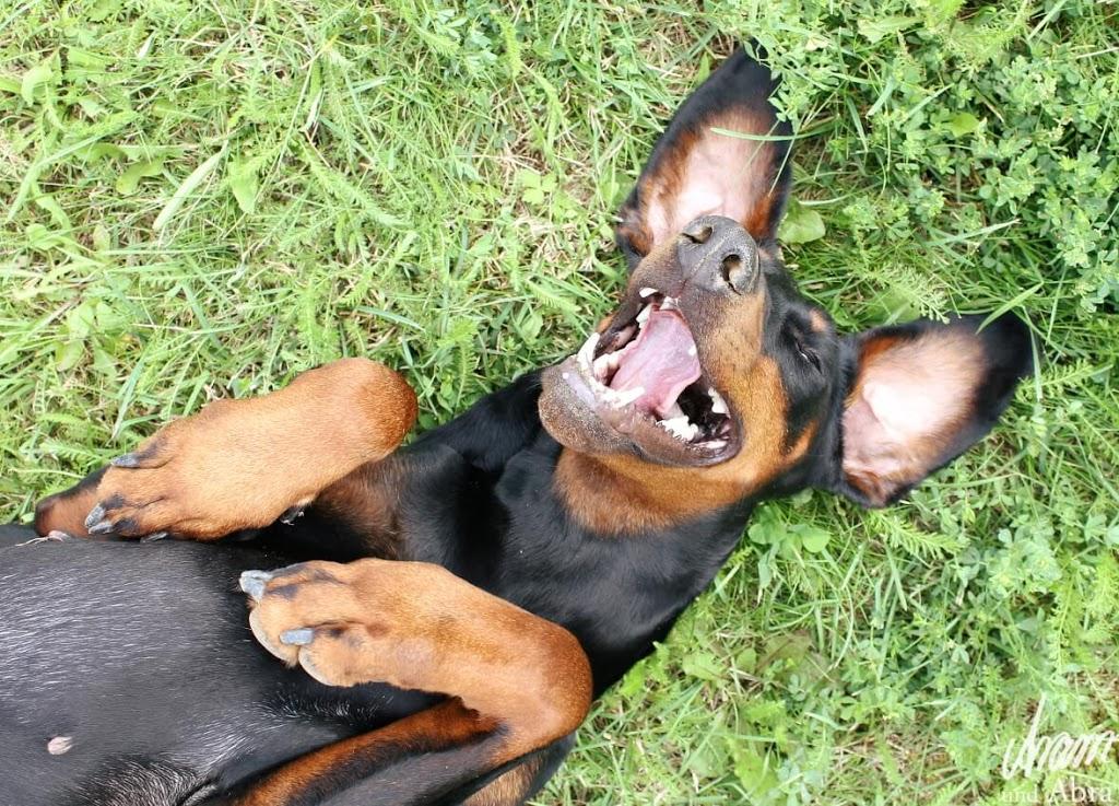 Mein Hund hat ein Superfrauchen, weil... [Blogparade]