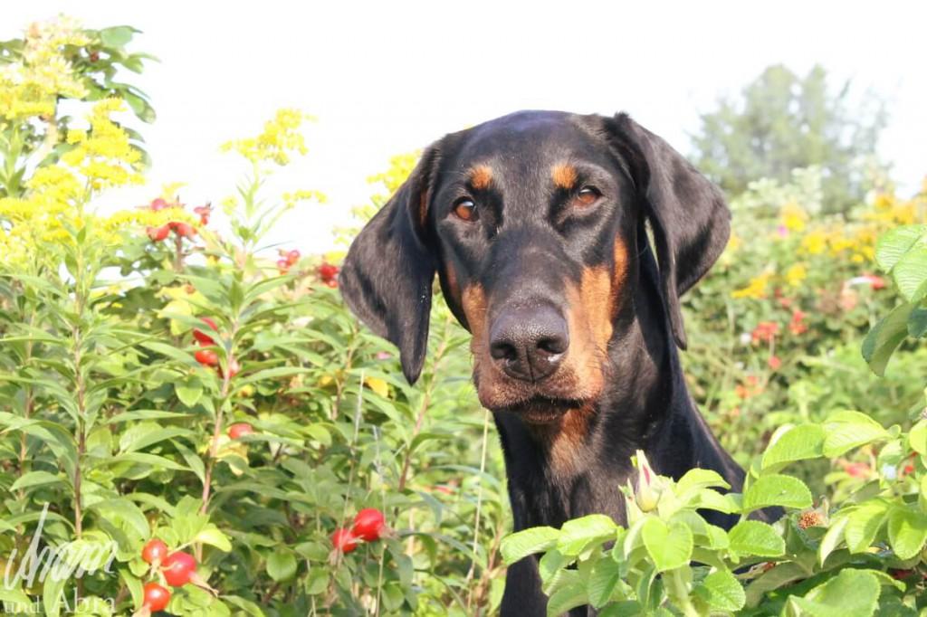 Hundemessen in Deutschland_Hund auf Wiese_Aram und Abra (1)