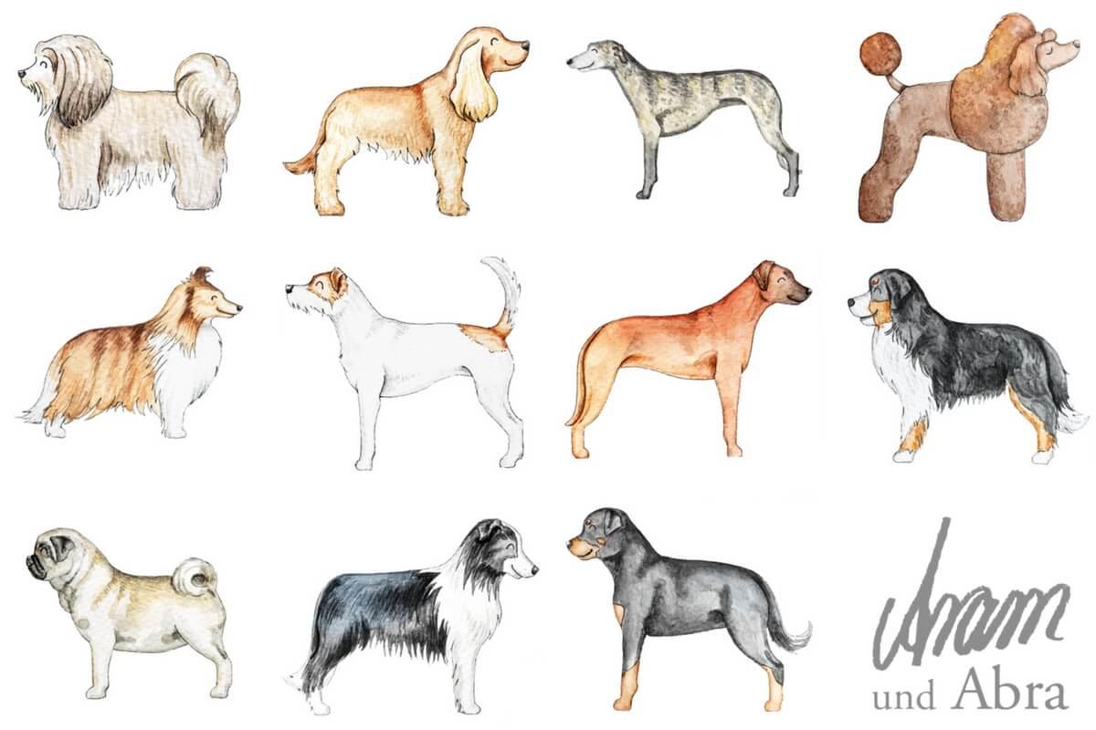 Illustrationen für Hundeblogger_Hunderassen