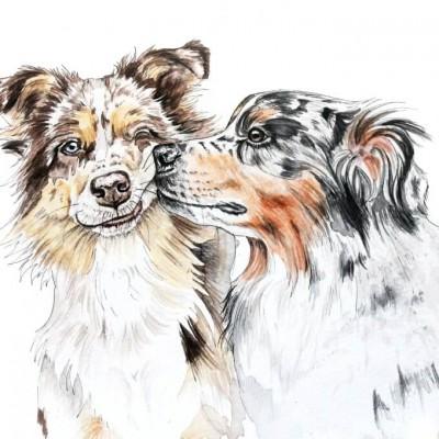 Aram und Abra_Hund zeichnen lassen_Kalender 2018_Australian Shepherd_Aquarell_Indanermädchen und Wildfang