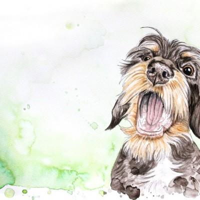 Aram und Abra_Hund zeichnen lassen_Kalender 2018_Dackel_Aquarell
