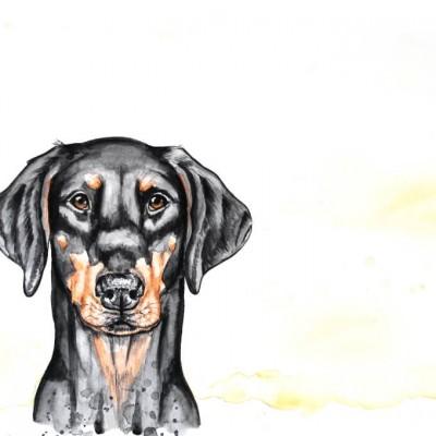 Aram und Abra_Hund zeichnen lassen_Kalender 2018_Dobermann_Aquarell