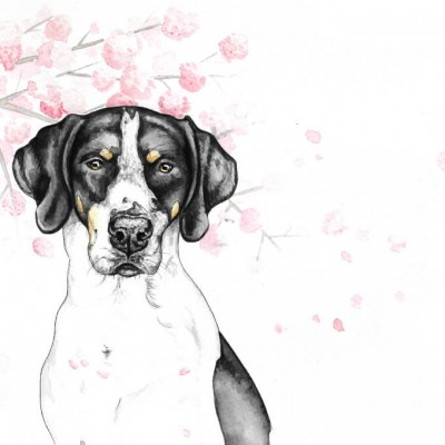 Aram und Abra_Hund zeichnen lassen_Kalender 2018_Hund Kirschblüten_Aquarell