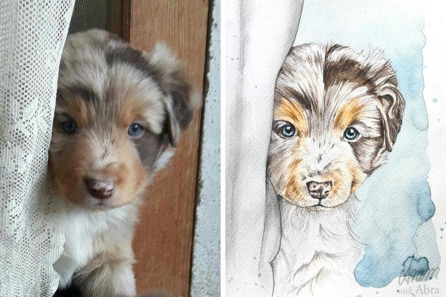 Tierportraits FAQ_Zeichnung Aquarell Australian Shepherd_Aussie
