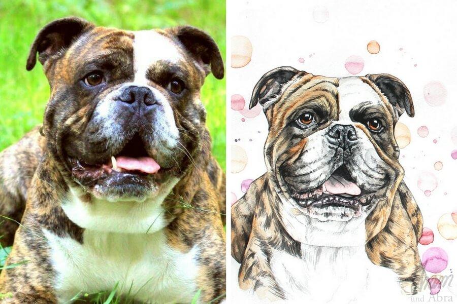 Tierportraits FAQ_Zeichnung Aquarell_Continental Bulldog_Bulldogge