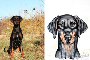 Tierportraits FAQ_Zeichnung Aquarell_Dobermann