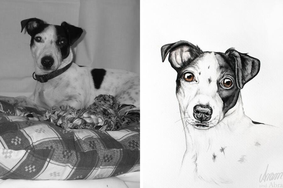 Tierportraits FAQ_Zeichnung Aquarell_Jack Russell Terrier