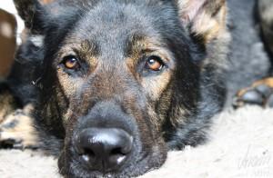 Die besten Hundeblogs - 10 Top Artikel (1)