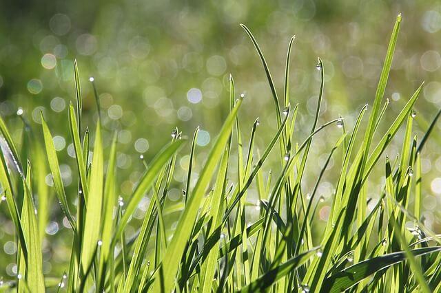 Die besten Hundeblogs - warum fressen Hunde Gras